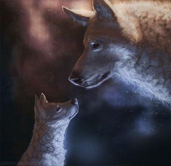 Фото Волчица и волчонок смотрят на друг друга, by Lesventie