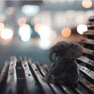 Фото Слоник сидит на лавочке на фоне боке