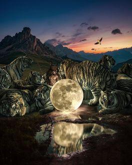 Фото Мальчик в окружении тигров стоит около полной луны, которая отражается в воде, by Marcel van Luit