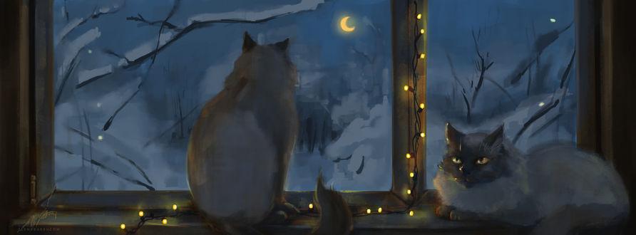 Фото Две кошки у окна, украшенного гирляндой, любуются снежной ночью, by Elena Barbu