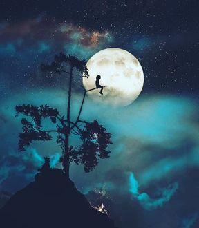 Фото Мальчик сидит на дереве на фоне полной луны, а у дерева сидит собака