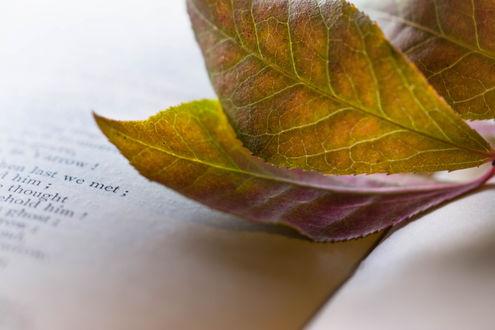 Фото Осенние листочки на открытой книге. Фотограф Julie Jablonski