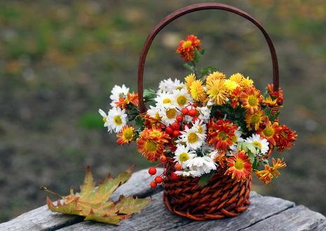 Фото Букет красивых осенних хризантем на деревянном столе, фотограф Нилла Шарафан