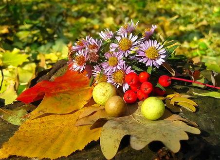 Фото Букет цветов и ягод лежит на больших осенних листьях