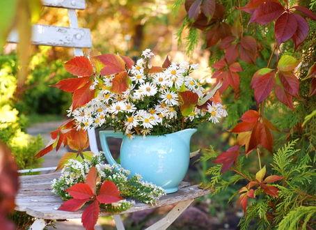 Фото Чудный букет ромашек в фарфоровом кувшине среди осенних листьев на дощатом стуле