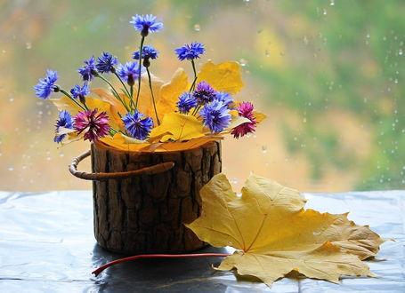 Фото Букетик цветов в интересной вазе, выполненной под пенек, на столе рядом с осенними листьями перед окном в каплях дождя