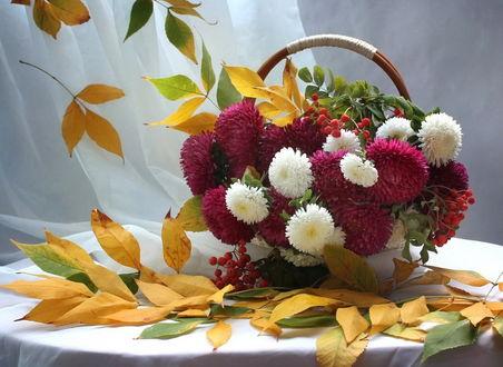 Фото Красивый букет, собранный из бордово-красных, белых астр и ягод рябины, в вазе на столе среди веточек с осенними листочками. Фотограф Ковалева Светлана