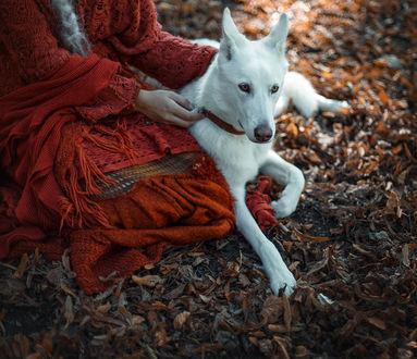 Фото Модель Хлоэ Де Витте с собакой. Фотограф Червона Ворона