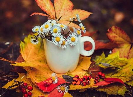 Фото Букет трогательных ромашек с листьями в белой фарфоровой кружке на столе, усыпанном осенними листьями и ягодами