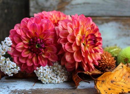 Фото Пышные хризантемы и белые цветочки на столе, рядом одинокий осенний лист