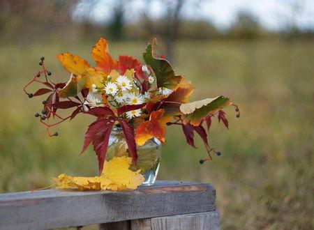 Фото Ромашки и разноцветные крупные осенние листья в стеклянной банке на краешке деревянной доски