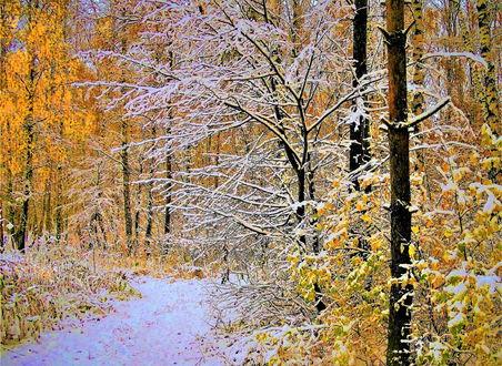 Фото В лесу на смену осени пришла красавица зима, фотограф Сергей Краев