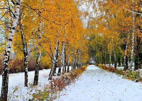 Фото Парк накануне зимы, выпал снег