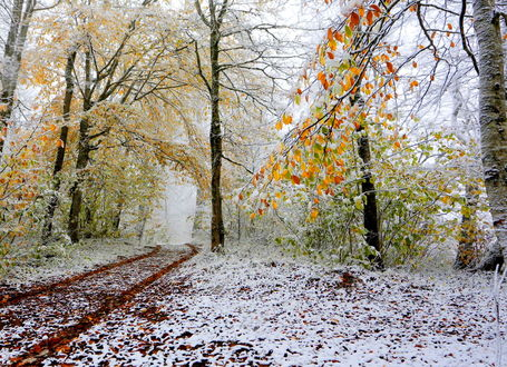 Фото В лес на смену осени пришла зима и посыпала все снежком