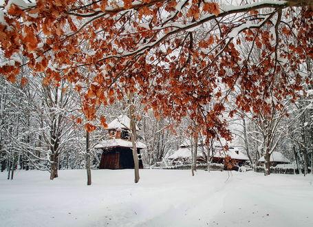 Фото В парк на смену осени пришла красивая зима, и выпал пушистый снег, покрыв деревья, дома и землю