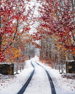 Фото Дорога проходит через осенне-зимний лес в снегу