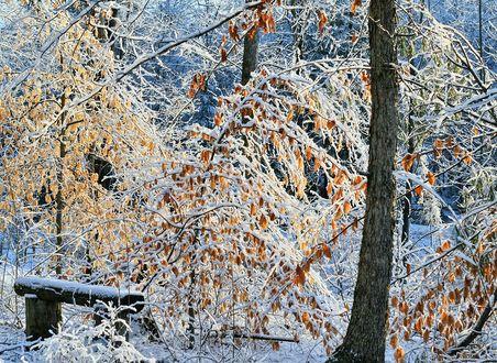 Фото Первый снег принакрыл деревья с еще осенними листочками