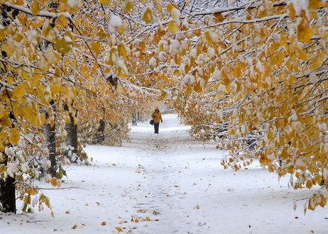 Фото Женщина куда-то спешит по снежной дороге в парке мимо заснеженных деревьев с еще осенними листочками