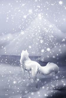 Фото Снежный зверь под сиянием