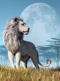Фото Лев стоит на фоне огромной луны, by deskridge