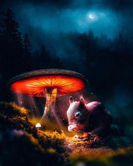 Фото Белка сидит под светящемся грибом