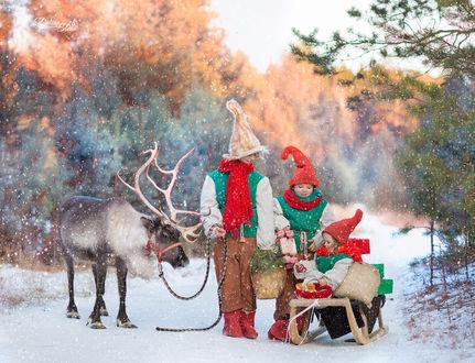 Фото Милые помощники Деда Мороза-дети с оленем и совсем маленькая девочка на санях. Фотограф Elena Selyutina