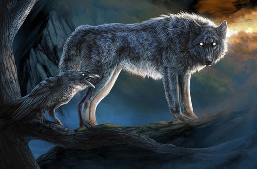 Фото Волк стоит рядом с вороном, by WolfRoad