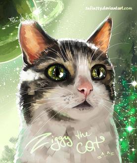 Фото У кошки в глазах отражается космос, by 1NFIN1TY (Ziggy the cat =^.^=)