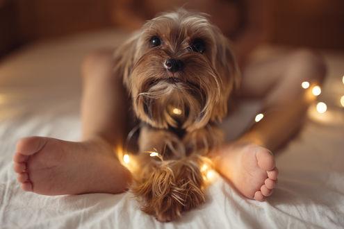 Фото Собачка сидит у ног девочки. Фотограф Дуке Александра