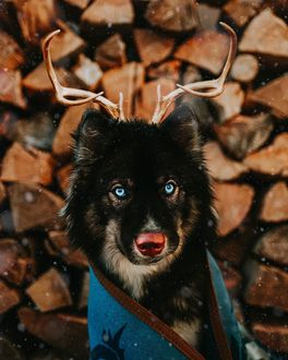 Фото Собака на фоне сложенных дров, by Graywoof