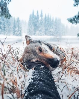 Фото Рука гладит пса, by Honza Е�ehГЎДЌek