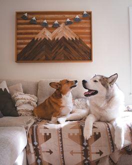 Фото Хаски и корги на диване, by Nick Terrel