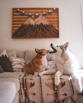 Фото Корги и хаски на диване, by Nick Terrel