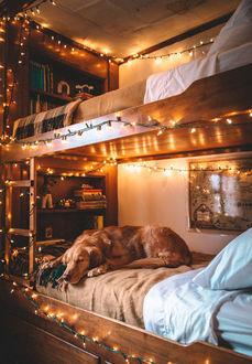Фото Собака породы золотистый ретривер лежит на кровати