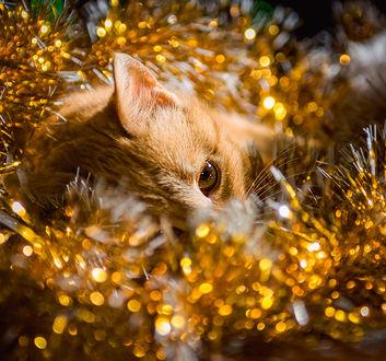 Фото Кошка в новогодней мишуре. Фотограф MVO - Марк Орлов