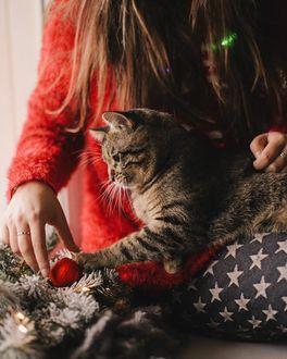 Фото Девушка с кошкой сидт перед елочными украшениями, by anamarkovych
