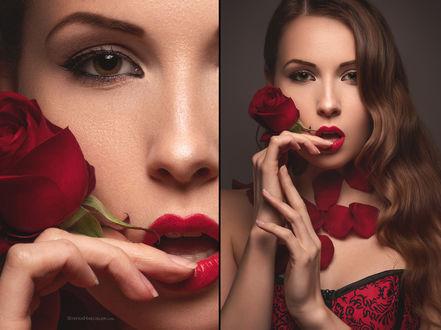 Фото Девушка Viktoria Stephanie с красной розой у лица, by Stefan Hаusler