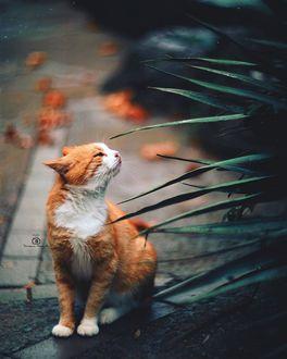 Кошка заинтересовалась зеленым растением, фотограф Татьяна Миронова