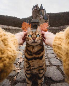 Фото Девушка прикладывает осенние листья к мордочке кошки, by Marti Gutfreund