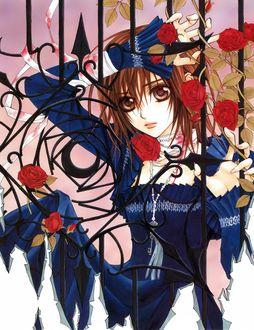 Фото Юки Кросс / Yuki Cross в синем платье среди алых роз из аниме Рыцарь-вампир / Vampire Knight, by Hino Matsuri