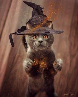 Фото Кот в волшебной шляпе стоит на задних лапках и смотрит на огоньки, by Stephanie Paquot