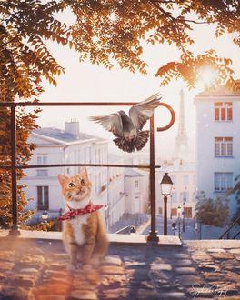 Фото Кот смотрит на голубя на фоне домов и Эйфелевой башни, by Stephanie Paquot