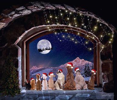 Фото Кошки и собаки в шапочках Санта-Клауса смотрят на летящие на фоне Луны сани, by Stephanie Paquot