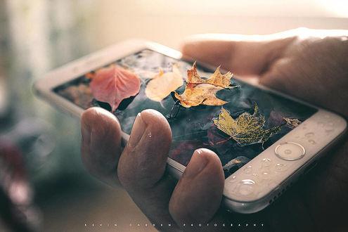 Фото В руке человека телефон с осенними листьями, by kevron2001