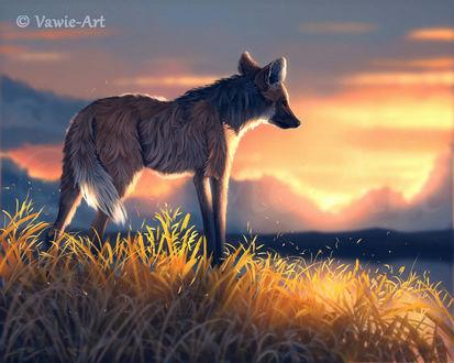 Фото Волк на фоне восхода солнца, by Vawie-Art