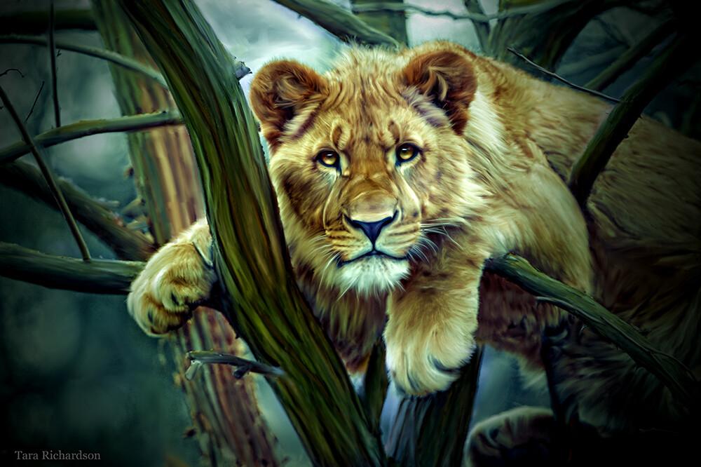 Фото Молодая львица на дереве, by Tara Richardson