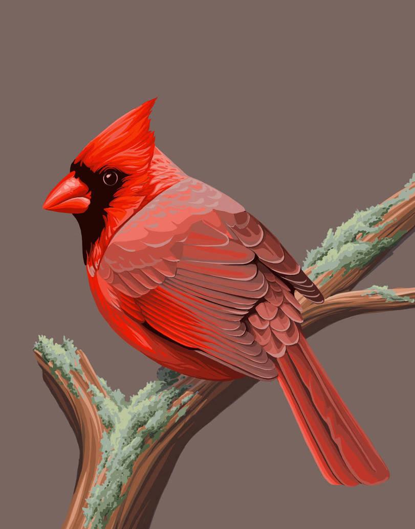 Фото Красный кардинал сидит на ветке, by Fiachmara