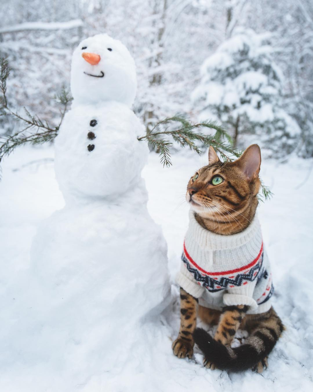 Фото Бенгальская кошка сидит рядом со снеговиком. by Laura Vilser