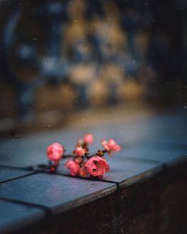 Фото Весенняя веточка на плитах, фотограф Татьяна Миронова
