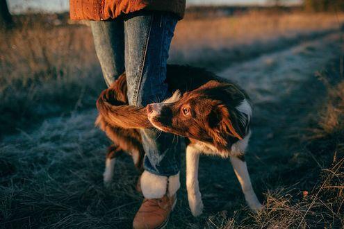 Фото Собака у ног девушки, фотограф Мария Струтинская